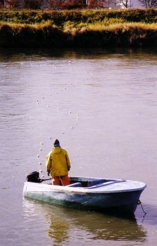September 2010 archives northwest indian fisheries for Puyallup river fishing