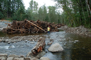 New mashel river logjams protect salmon and property for Nisqually river fishing report
