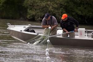 lummi fishery