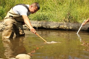 Kyle Kautz, Nisqually tribal natural resources, collects fish from a pool in the former Ohop Creek channel.