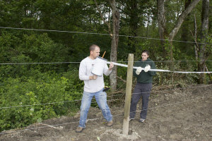 Tulalip tribal staff build a five-strand electrical fence to keep elk out of a planted corn field.