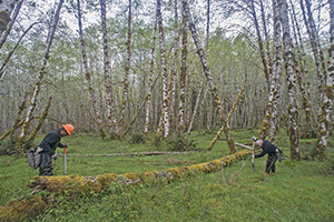 A Quinault Indian Nation tree planting crew plants spruce trees as part of jump-starting the growth of this key species that helps stabilize river channels and fish habitat.